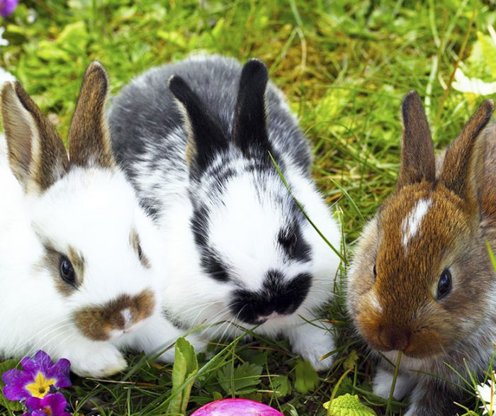 7 Things to Consider When Adopting a Rabbit | RSPCA NSW
