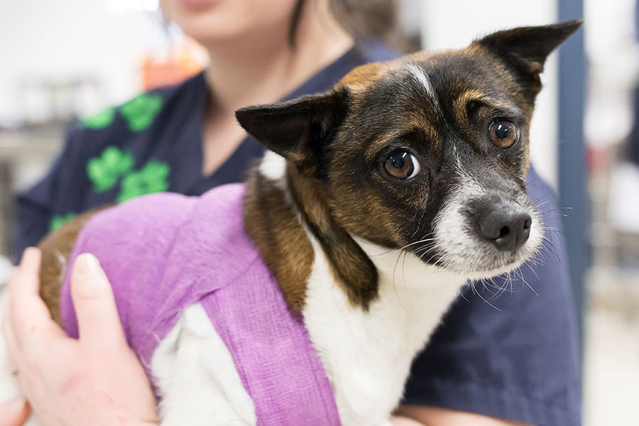 Rspca Rescue Dogs Nsw