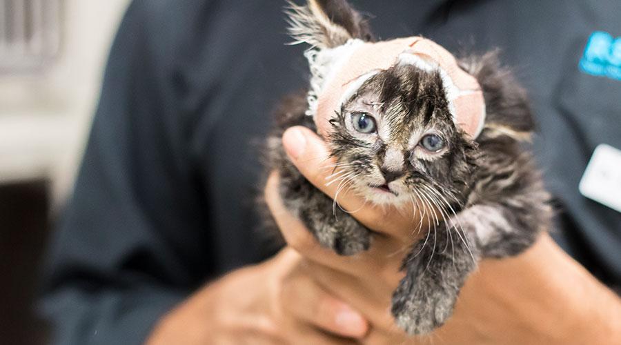Animal Welfare Rspca Nsw