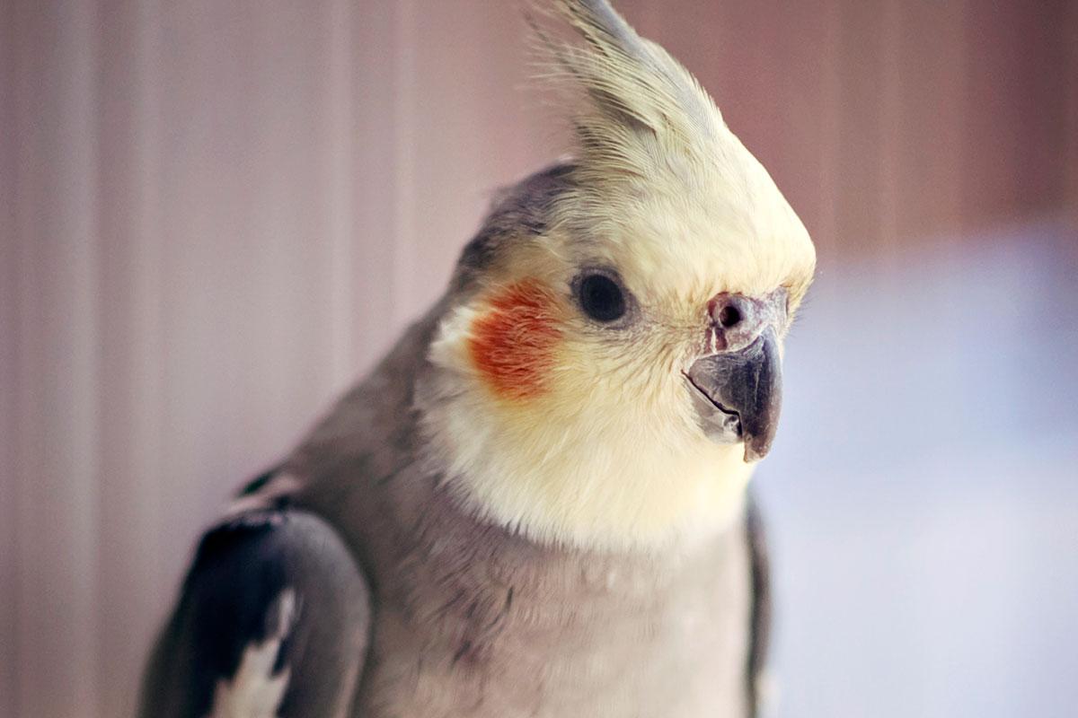 Birds   RSPCA NSW