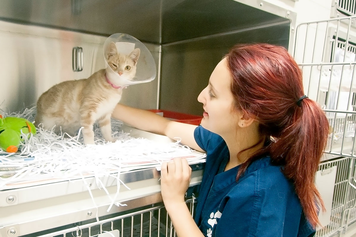 Rspca Hunter Veterinary Hospital Rutherford Rspca Nsw