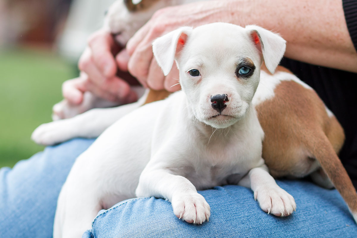 Discover how to keep your forever friend happy, healthy and safe.