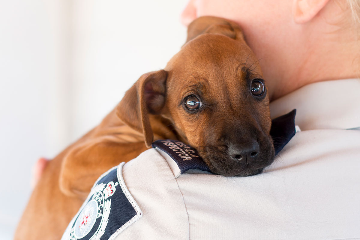 Image of: Rspca Nsw Meet The Rspca Nsw Inspectorate And Discover The Laws That Protect Nsw Animals Rspca Animal Welfare Rspca Nsw