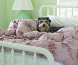 Dog in bed during winter