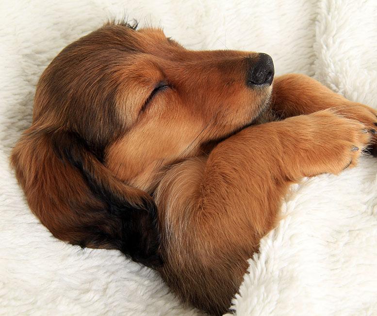Спасибо девушке, картинки доброй ночи с животными