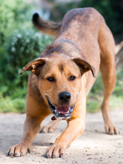 What to expect when you adopt an animal from RSPCA NSW