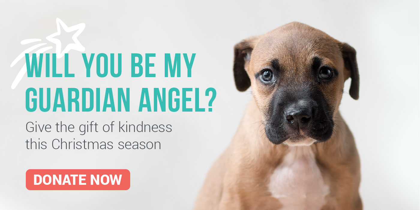 Christmas gifts for homeless dogs videos