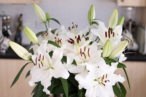 Lilies are seriously toxic to cats.