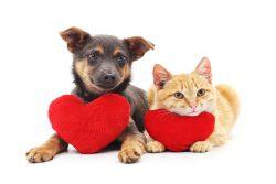 Valentine's day pet hazards