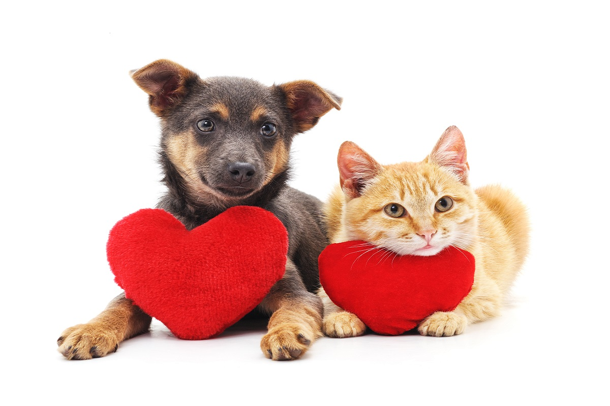 Valentine's day pet hazards