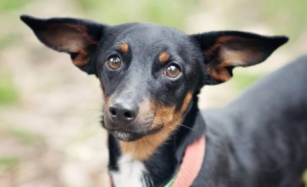 Dog adoption myths
