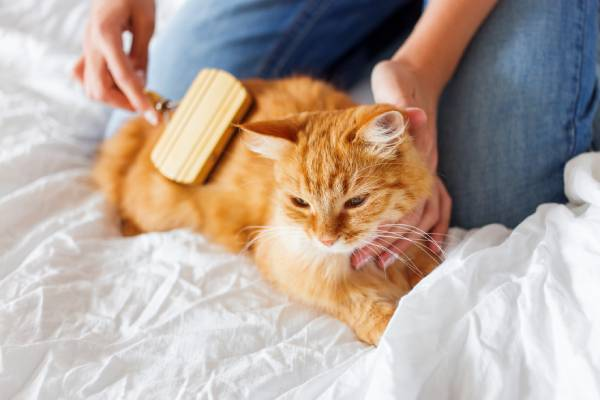 Tips for being a responsible cat owner.