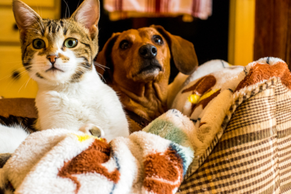 Keeping up to date with flea and worm treatments