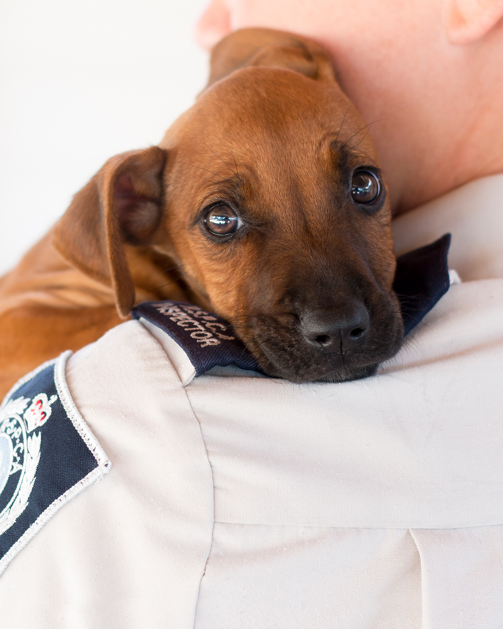 Homepage | RSPCA NSW