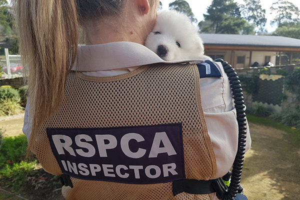 white puppy looking over inspector shoulder