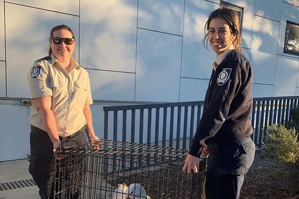 two inspectors holding an injured goose in a cage