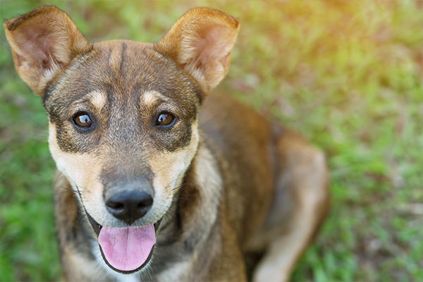 Identification Number For Selling Or Rehoming Animals Rspca Nsw