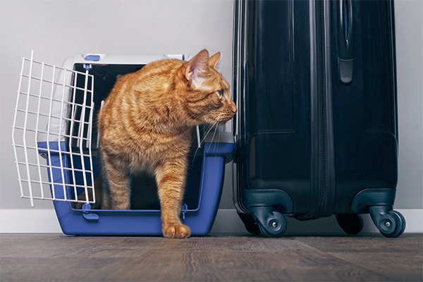 How to responsibly rehome your pet