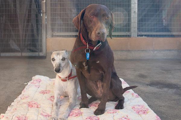 Bonded pair Jasper and Cola