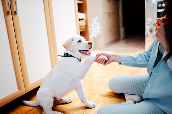 What to expect from fostering an animal