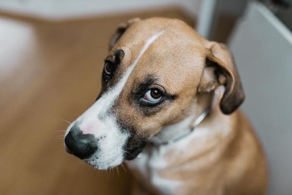 Mental health in pets