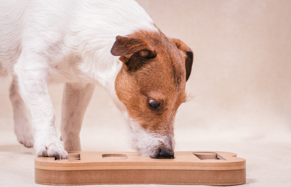 Enrichment - How to responsibly protect your pet