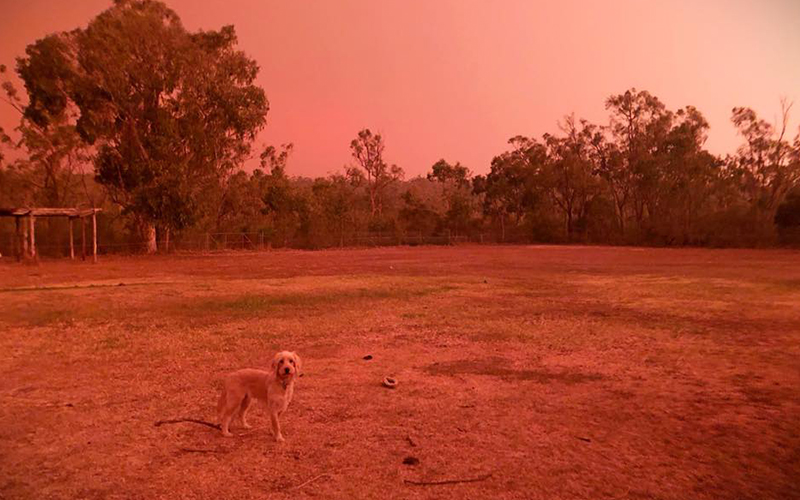 red sky, donate bushfire australia