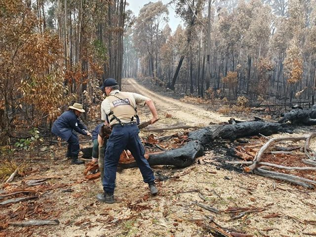 RSPCA NSW Inspector clearing a burnt tree blocking the road.